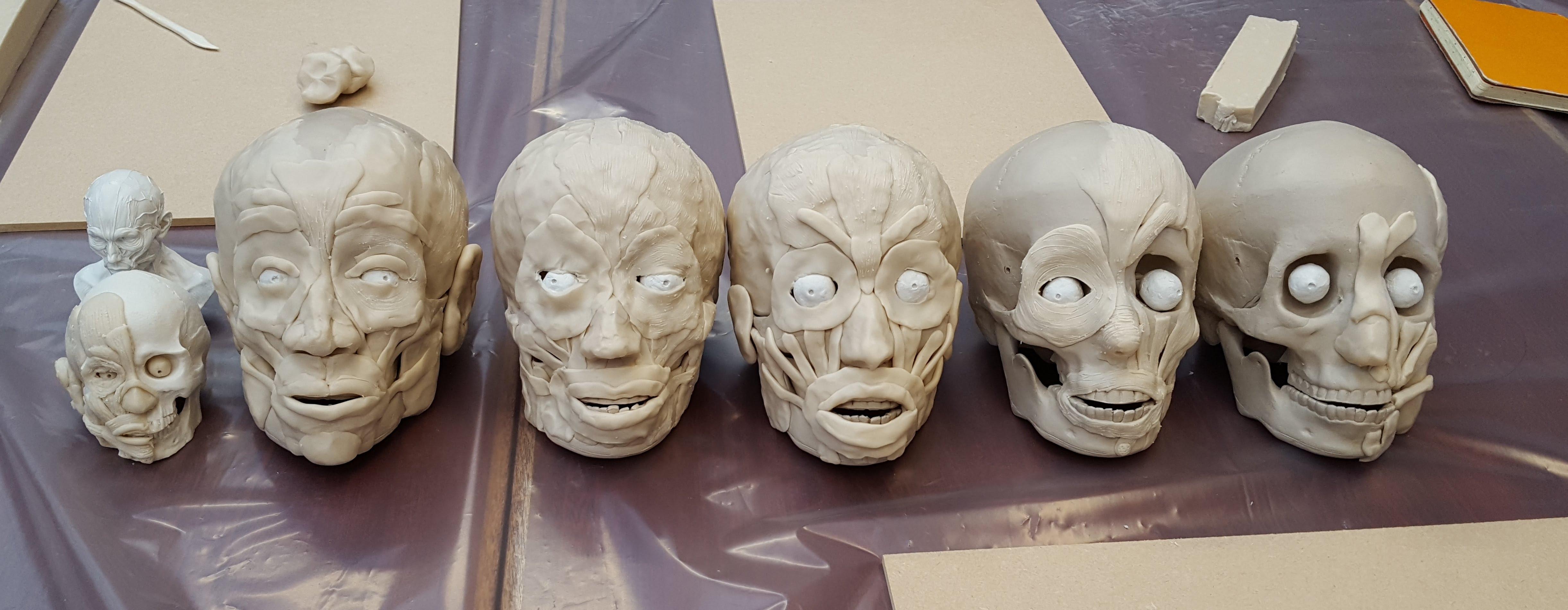 facial muscles workshop photo
